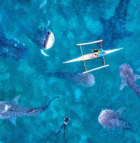 필리핀 세부 오슬롭 고래상어 투어