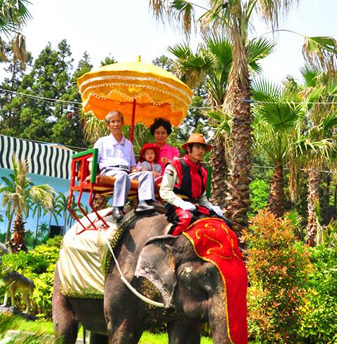 제주 점보빌리지 코끼리트래킹 탑승권