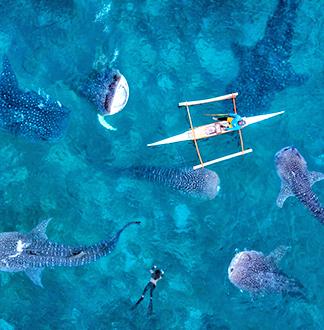 세부 오슬롭 고래상어 투어