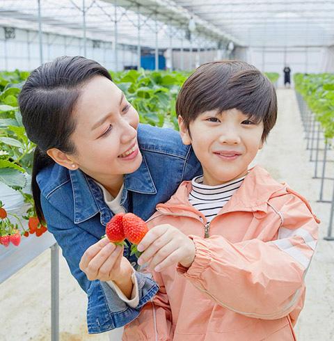 일산 가좌 딸기따기체험 농장