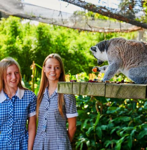 호주 멜버른 힐스빌 야생동물 보호구역 입장권