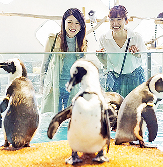 오사카 살아있는 뮤지엄 니프렐 입장권 (동물원, 아쿠아리움)