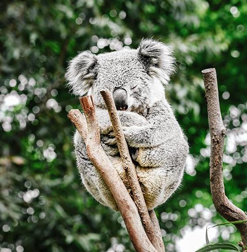 호주 시드니 페더 데일 야생 공원 입장권
