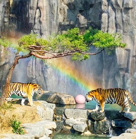 과천 서울대공원 동물원 입장권